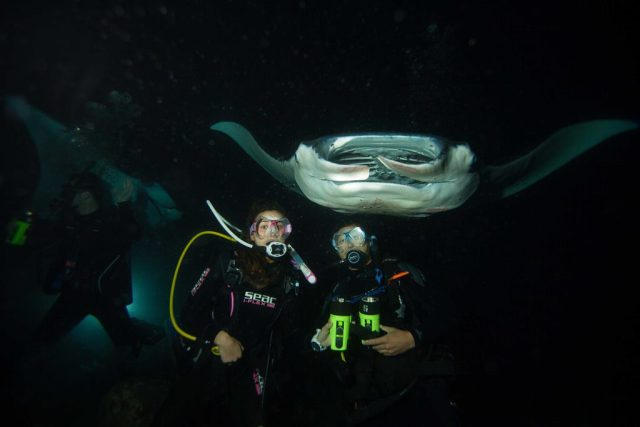 Night Diving - Manta Rays - dive in the United States