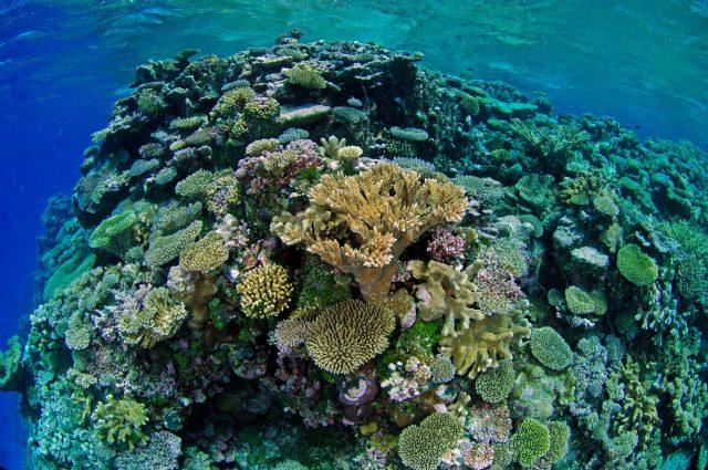 best places to go scuba diving in june - bikini atoll