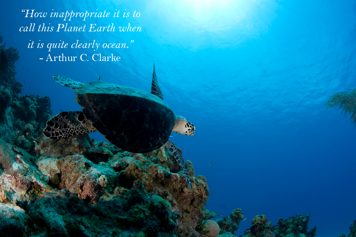Your Favourite Quotes About The Ocean