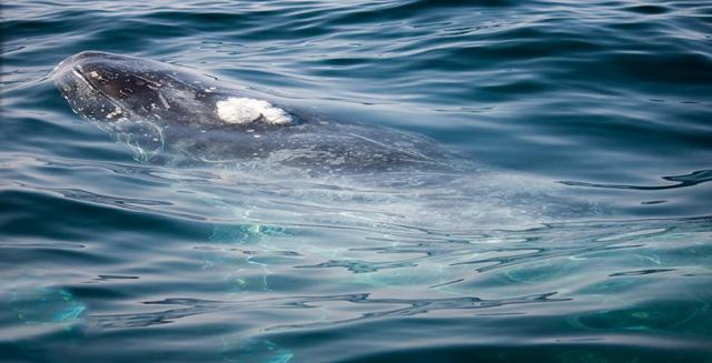 best places to swim with humpback whales code of conduct