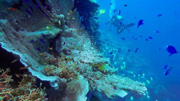 Padre Burgos - Philippines - Scuba Diving