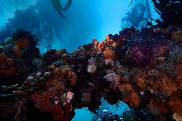 Wreck - New Zealand - Ship Wreck - Underwater