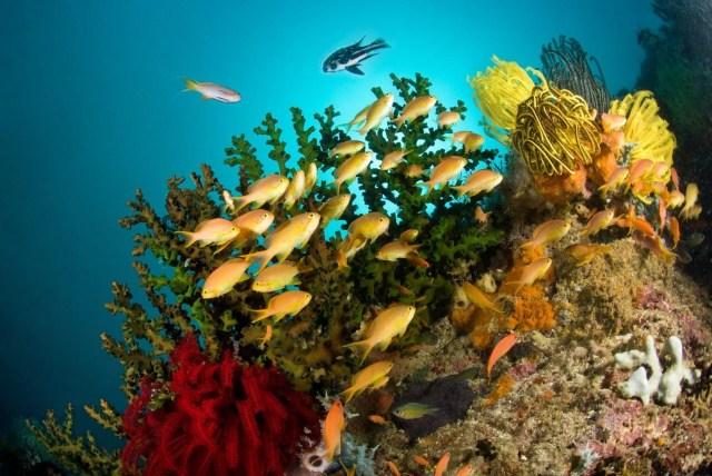 Philippines - marine life - underwater