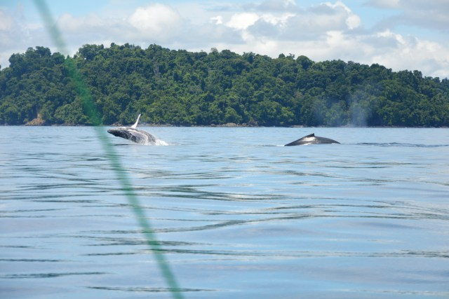 Snorkeling and whale watching in Coiba Panama