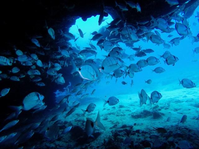 fuerteventura scuba diving