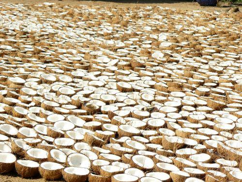 kokosove-orechy