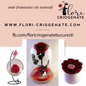 flori-criogenate.com