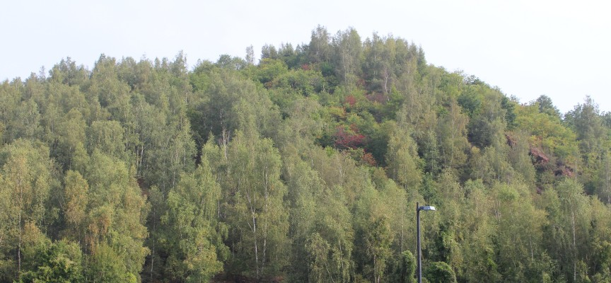 Début d'automne sur le terril.