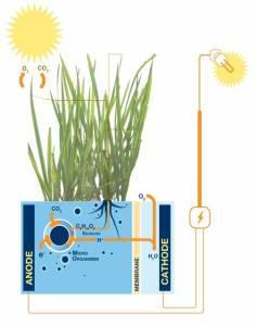plante et électricité