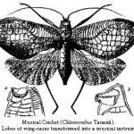 taxonomiste