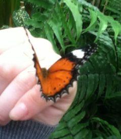 Papillon posé sur une main