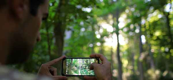 crop man photographing forest on smartphone