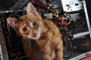 cum-iti-protejezi-gadgeturile-si-cablurile-de-animale_2