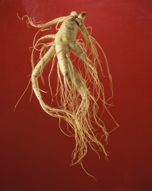 Whole Ginseng Root