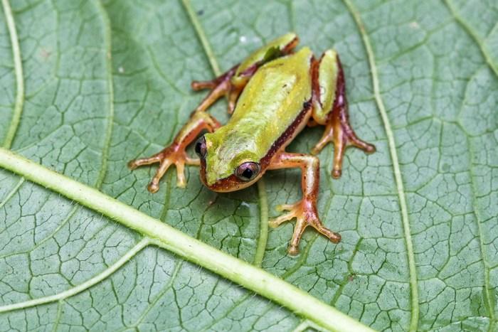 7114_banana frog pr img2