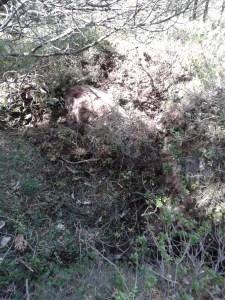 orsa occultata - leggera