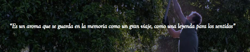 Frase Agua de Sevilla