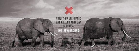 96 elefantes mueren al dia