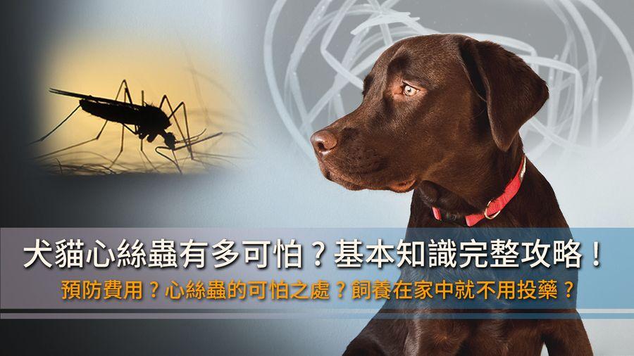 《貓犬照護》一篇攻略搞定心絲蟲預防費用、症狀、治療問題