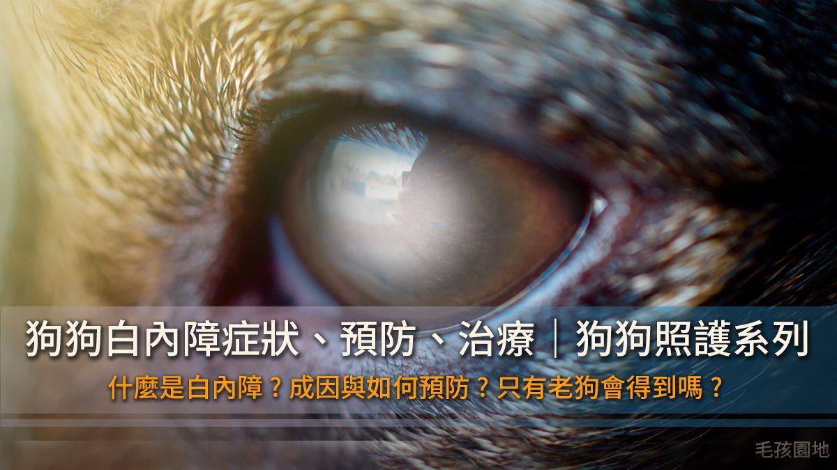 《狗狗眼睛照護》狗狗白內障的症狀為何、預防、治療整理
