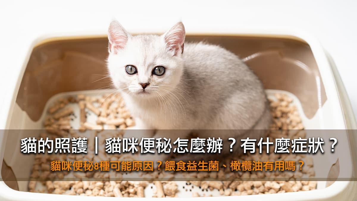 貓咪便秘怎麼辦?8種貓貓大不出來的原因