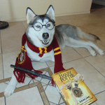 Rajah as Harry Potter