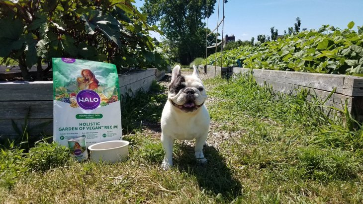 Manny the french bulldog smiling next to his garden of vegan pet food