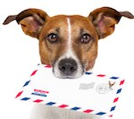 You've Got Petmasters Mail