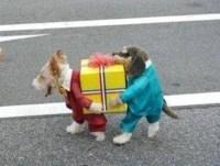 Bella Shares Her Halloween Costume | PetMeds Blog