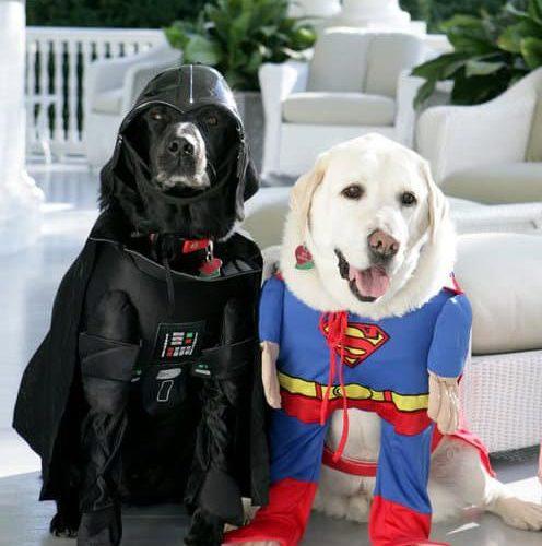6 Pet Halloween Costumes