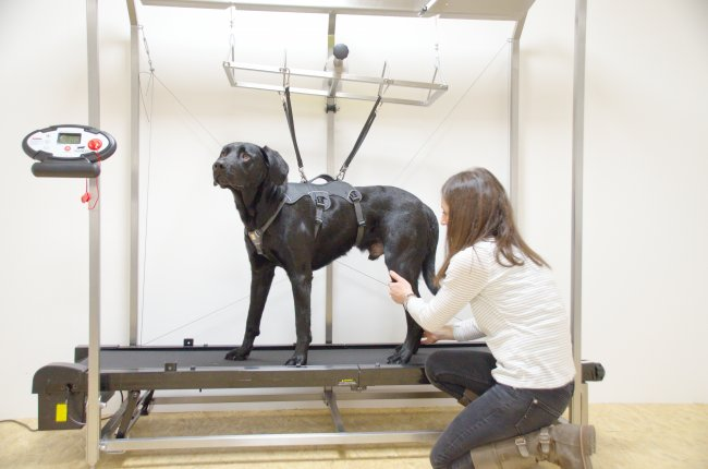 therapvet dogpacer therapy unit