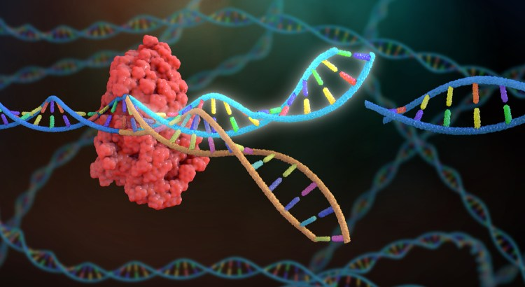 Cartoon image of a protein attached to a DNA double helix that has been spliced