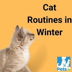 Cat Routines in Winter – Pets.ie