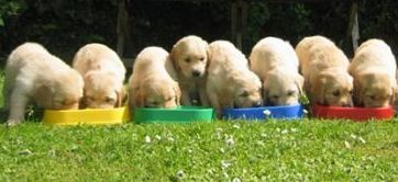 Autism Assistance Ireland Puppies Eating