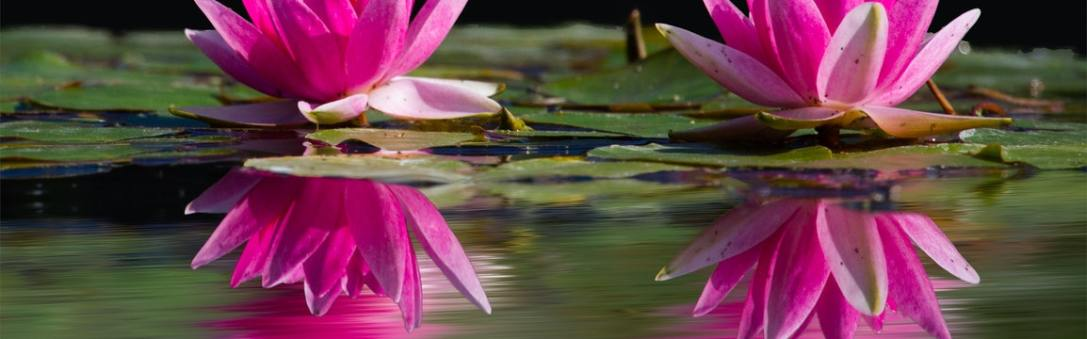 pond with flowers in it