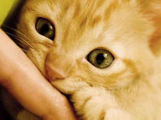 Cat bite on hand