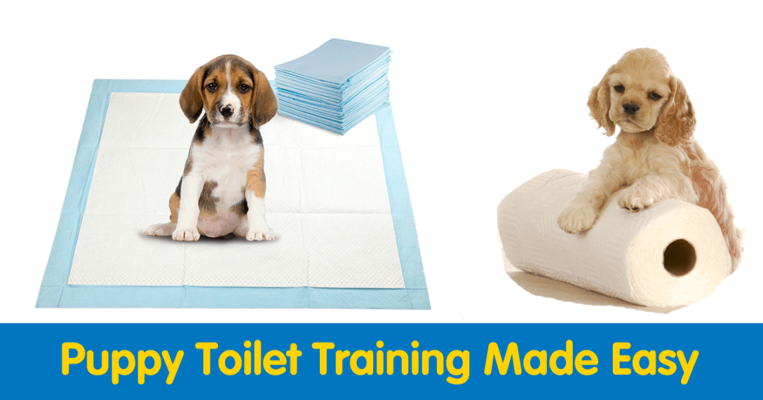 puppy-training-with-pads