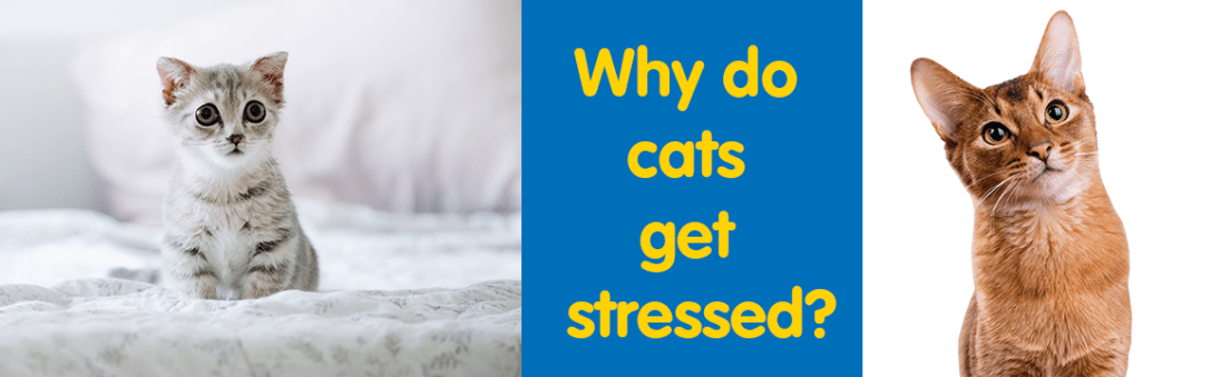 why do cats get stressed