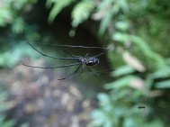 Einer der vielen Spinnen