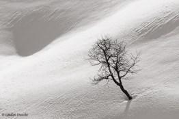 profil-fotograf-catalin-enache-19