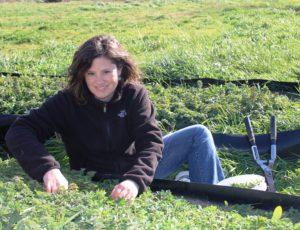 joce harvesting oregano