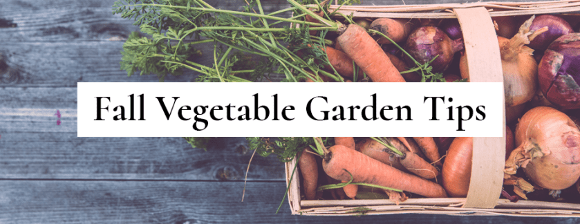 Fall Vegetable Garden Tips