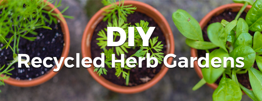 DIY Recycled Herb Gardens