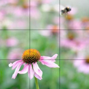 flower with grid