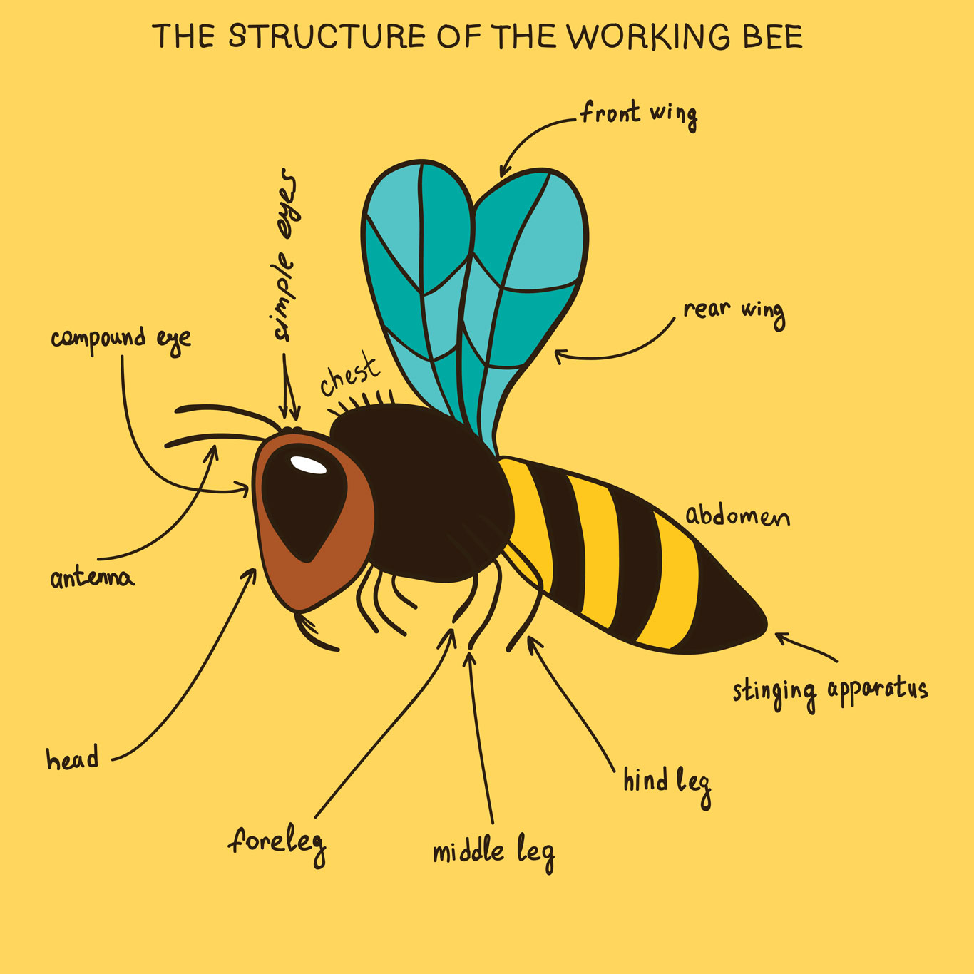 hight resolution of Bee aware: Honey bee lessons for the classroom