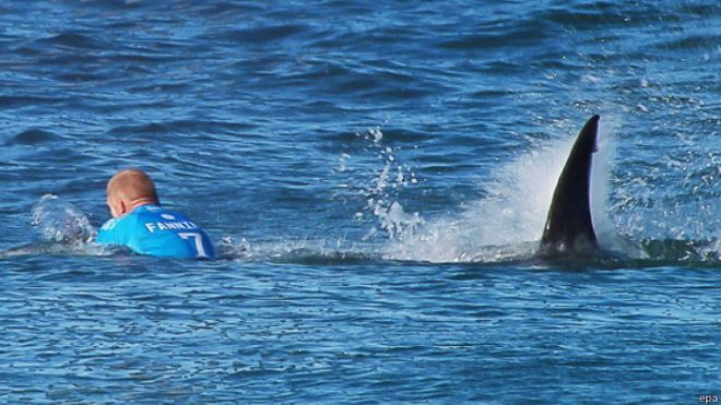 tiburon surf