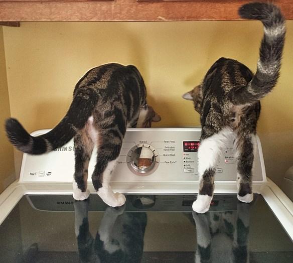 Jake and Elwood washing clothes
