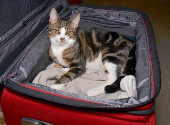 Jake unpacked