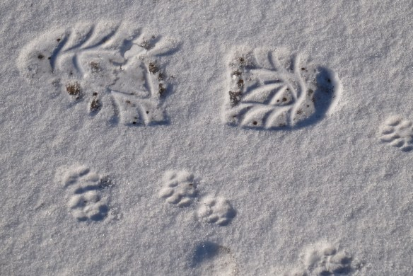 Footprint and catprint in ice