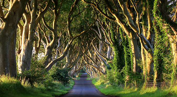 Game of Thrones Tours: Discover Westeros in Northern Ireland